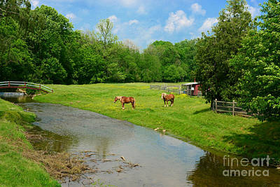 Belgian Draft Horse Photograph - Horses At Home On The Range by Paul Ward