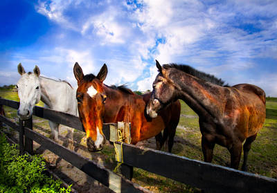 Three Trees Photograph - Horses At The Fence by Debra and Dave Vanderlaan