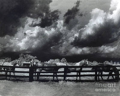Horses Black And White Infrared Stormy Sky Nature Landscape Print by Kathy Fornal