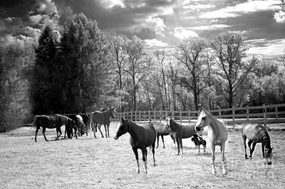 Horses Black And White Infrared - Surreal Horses Black White Nature Landscape Equine Print by Kathy Fornal