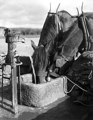 Stone Trough Photograph - Horses Drinking From Stone Trough by Irish Photo Archive
