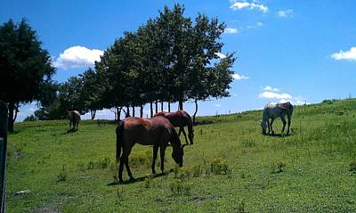 Nature Photograph - Horses Graze by Kenny Glover