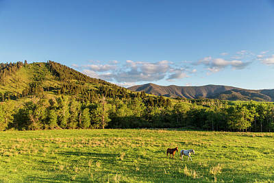 Horses In Pasture In The Foothills Print by Chuck Haney