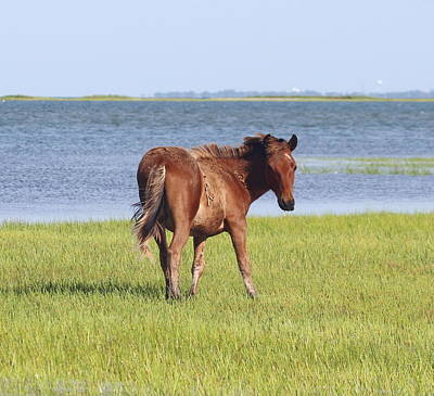 Grass Photograph - Horses Of Shackleford Banks 2014 5 by Cathy Lindsey