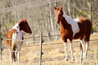 Horses Posing Original by Toppart Sweden