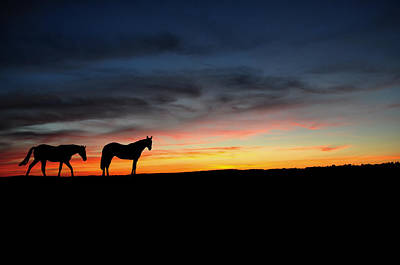 Stallion Drawing - Horses Walking In The Sunset by Aged Pixel