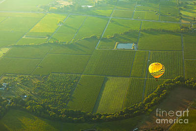Hot Air Balloon Over Napa Valley California Print by Diane Diederich