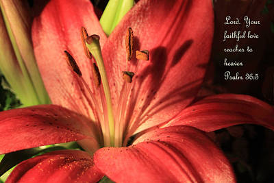 Hot Red Lily Ps. 36v5 Print by Linda Phelps