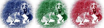 Dog Pics Photograph - Hound Colors by John Rizzuto