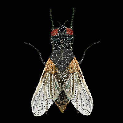 House Fly Bedazzled Print by R  Allen Swezey