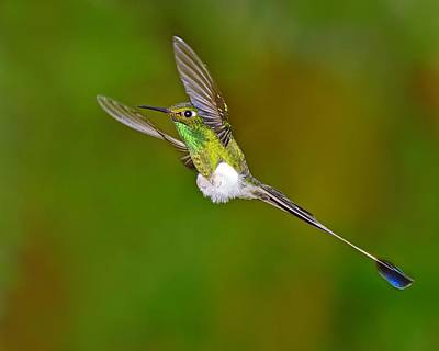Hovering Print by Tony Beck
