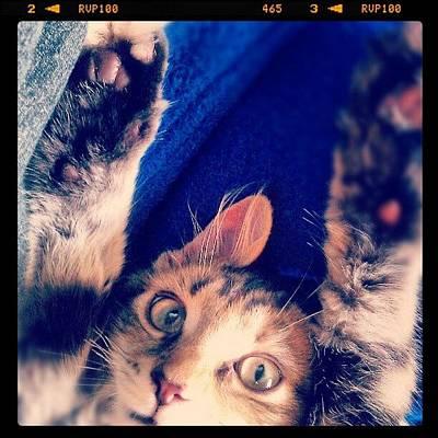 Cats Photograph - How Big Is Raja? by Jill Battaglia