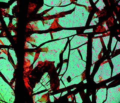 Psychedelic Photograph - Huckita  by Hodges Jeffery