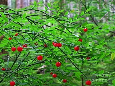 Huckleberry Bush Print by Lena Photo Art