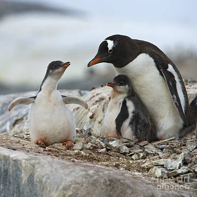 Nature An Bird Photograph - Hug Me... by Nina Stavlund