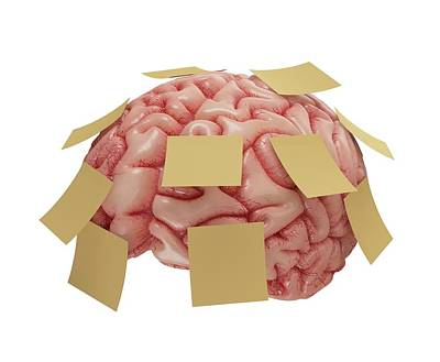 Psychology Photograph - Human Brain With Sticky Notes by Ktsdesign