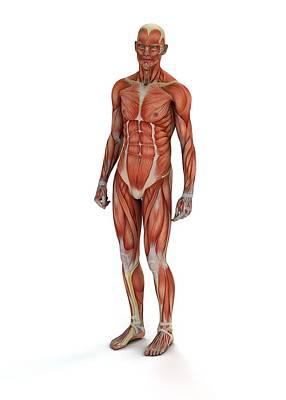 3-dimensional Photograph - Human Muscles by Mikkel Juul Jensen
