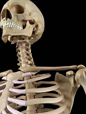 Human Head Photograph - Human Shoulder Bones by Sciepro