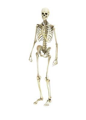 3-dimensional Photograph - Human Skeleton by Mikkel Juul Jensen