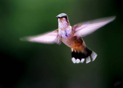 Digitally Manipulated Photograph - Hummer Ballet 3 by ABeautifulSky Photography