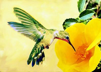 Hummingbird And California Poppy Print by Bob and Nadine Johnston