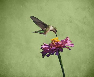 Hummingbird And Zinnia Print by Sandy Keeton