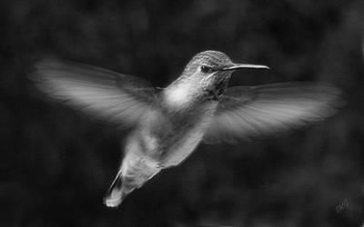 Hummingbird Print by Ben and Raisa Gertsberg