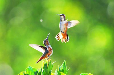Hummingbird Dance  Print by Lynn Bauer