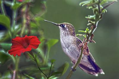 Hummingbird Delight Print by Sandi OReilly