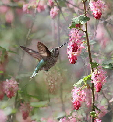 Hummingbird Heaven Print by Angie Vogel