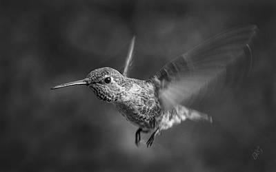 Hummingbird No 2 Print by Ben and Raisa Gertsberg