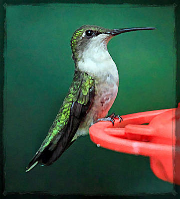Florescent Lighting Photograph - Hummingbird Perched On Feeder by Geraldine Scull
