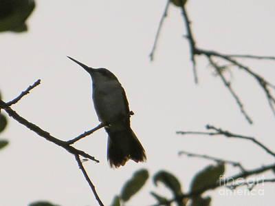 Hummingbird Silhouette 2 Print by Joy Hardee