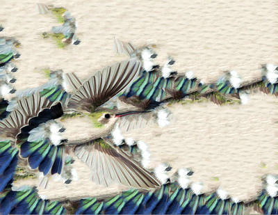 Feather Photograph - Hummingbird With Happy Feet by Gregory Scott