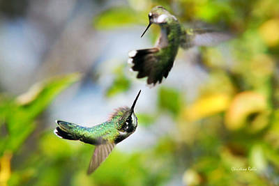 Hummingbird Photograph - Hummingbirds Ensuing Battle by Christina Rollo