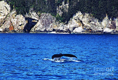 Humpback Whale Alaska Print by Thomas R Fletcher