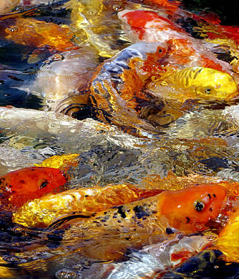 Frenzy Photograph - Hungry Koi by Bob Slitzan