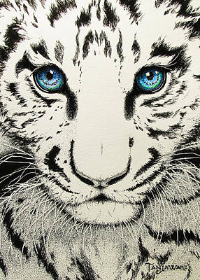 Tiger Drawing - Hungry Eyes by Tanja Ware