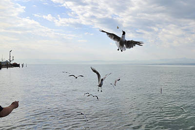 Hungry Seagulls Flying In The Air Print by Matthias Hauser