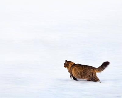 Prints Cat Photograph - Hunter At Work by Theresa Tahara