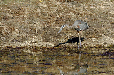 Nature Photograph - Hunting For Fish by Roy Williams