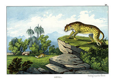 Cheetah Drawing - Hunting Leopard by Splendid Art Prints