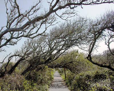 Beach Photograph - Hurricane Blown Trees by Tom Gari Gallery-Three-Photography