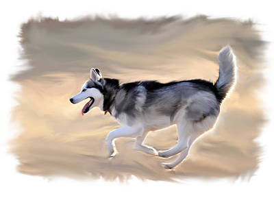 Siberian Husky At Play Print by Kevin Pate