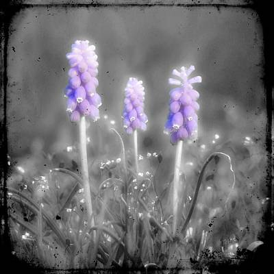 Purple Grapes Digital Art - Hyacinth Soldiers by Gothicolors Donna Snyder