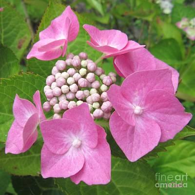 Florets Photograph - Hydrangea Posy by John Clark