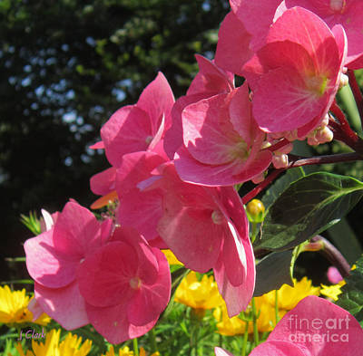 Florets Photograph - Hydrangea Selfie by John Clark