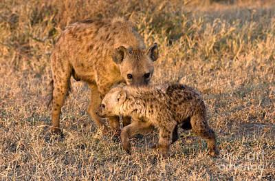 Hyena Mother And Cub Print by Chris Scroggins