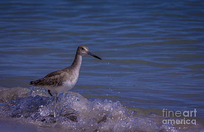 Wading Bird Photograph - I Can Make It by Marvin Spates