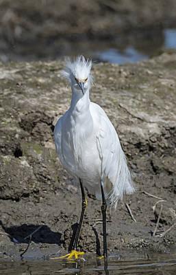 Attitude Photograph - Snowy Egret With Attitude by Loree Johnson